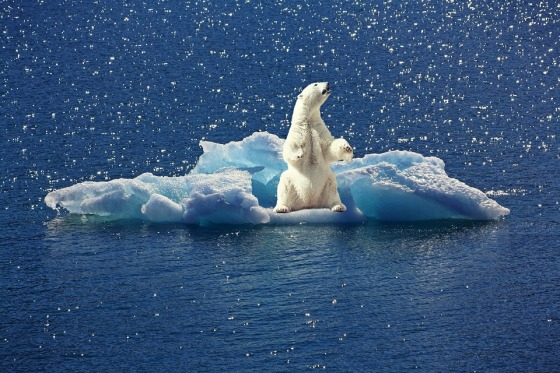 okean severni ledeni beli medved pix